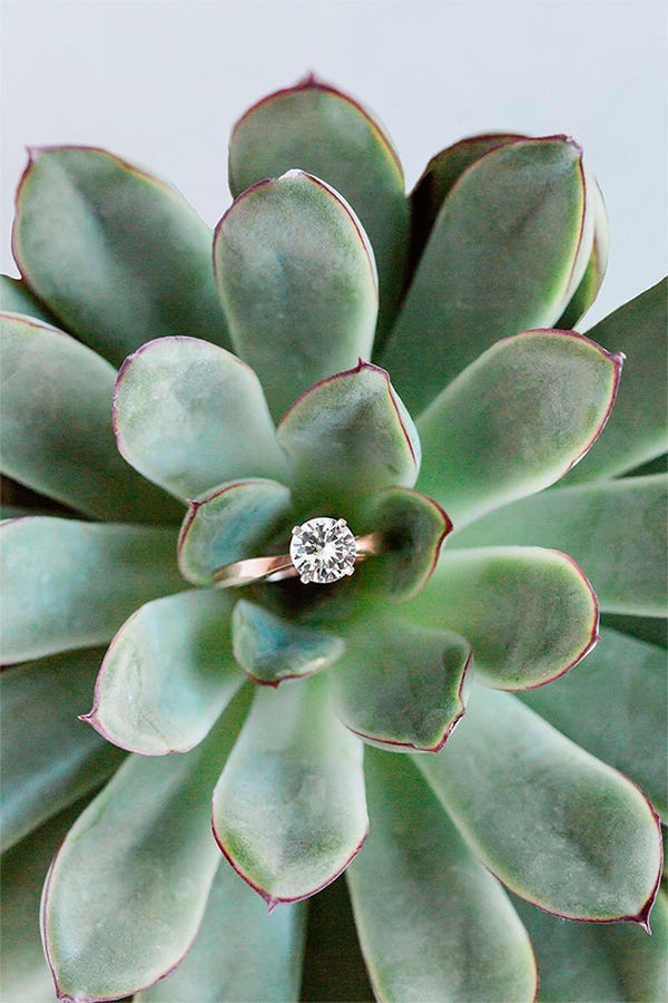 rose gold lab grown diamond ring in succulent